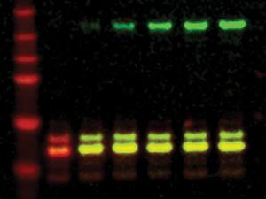 Idnetificacion proteinas